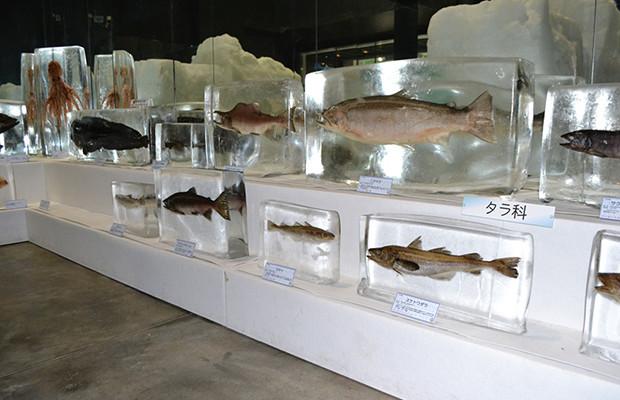 Hasil gambar untuk okhotsk sea ice museum